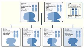 thalassemia inheritance pattern